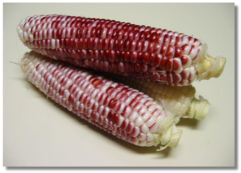 Red corn - 3 ears 2 [drop-shadow]