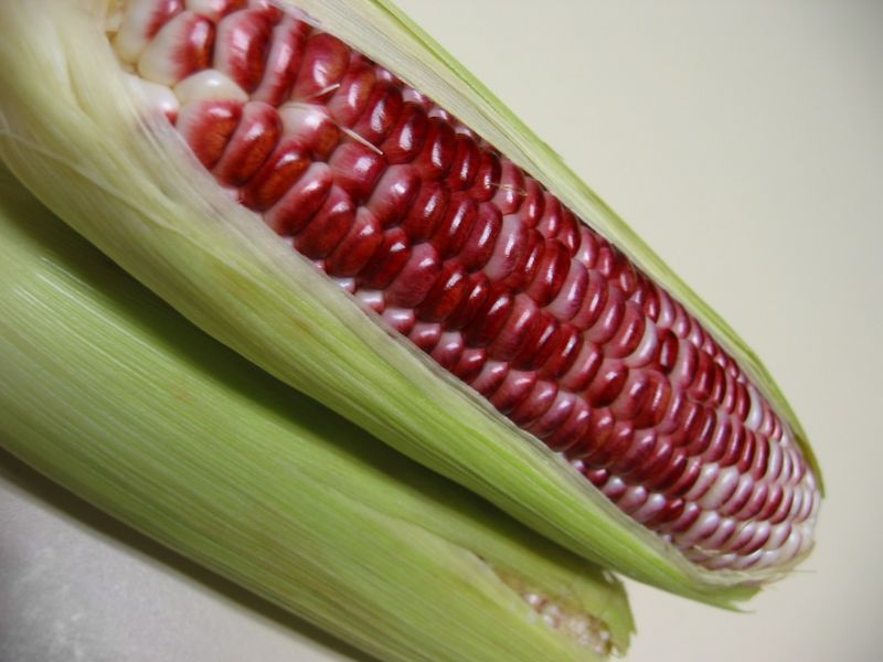 Red corn - 3 ears partially exposed perspective