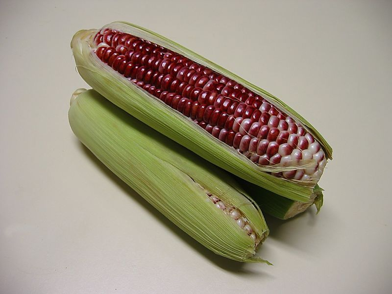 00aFavorite Red corn - 3 ears partially exposed