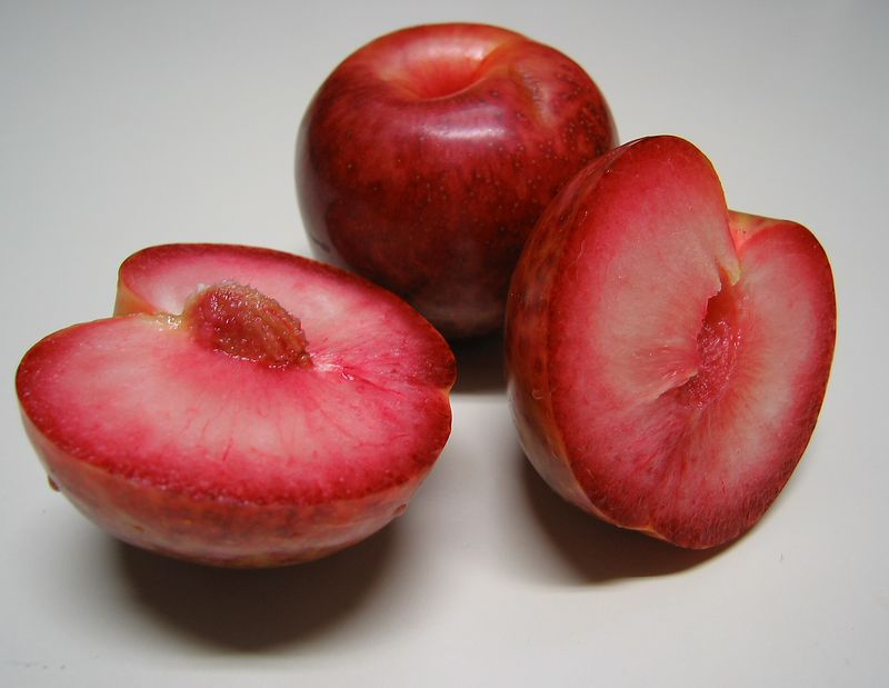 00aFavorite Pluot - one cut in half, one intact [full resolution&size]