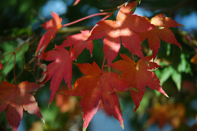 Fall In Our Garden