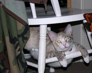 Yum Yum just hangin' under my computer chair