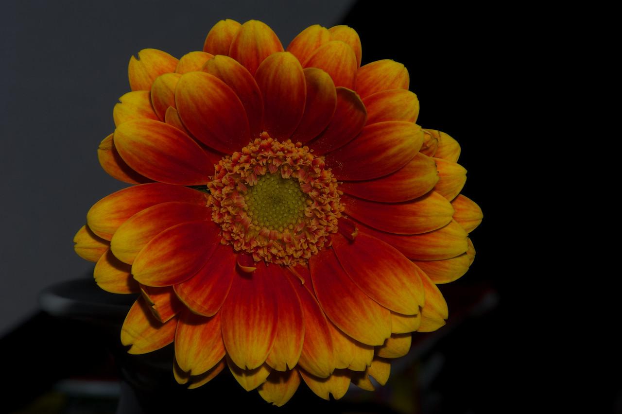 Flower_2010-09-14_22-07-58_DSC_0230_©RichardLaing(2010)