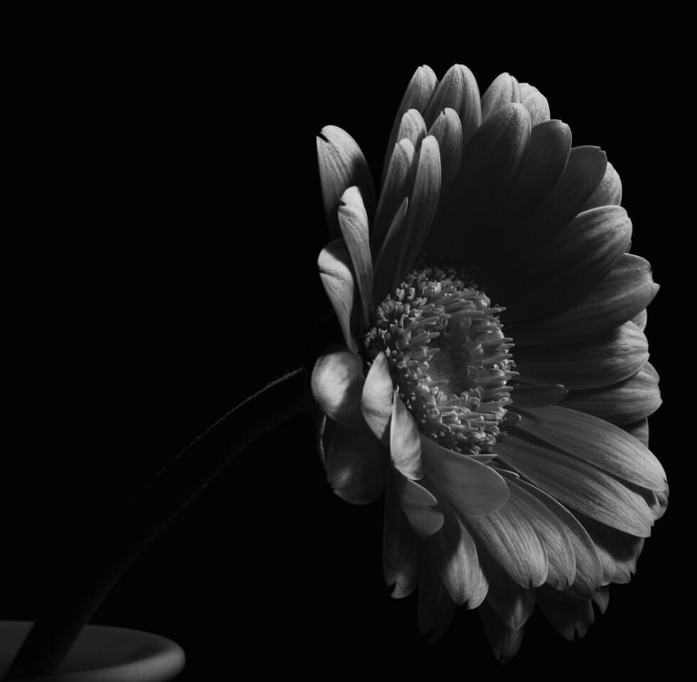 Flowers_2010-09-15_21-35-47_DSC_0327_©RichardLaing(2010)