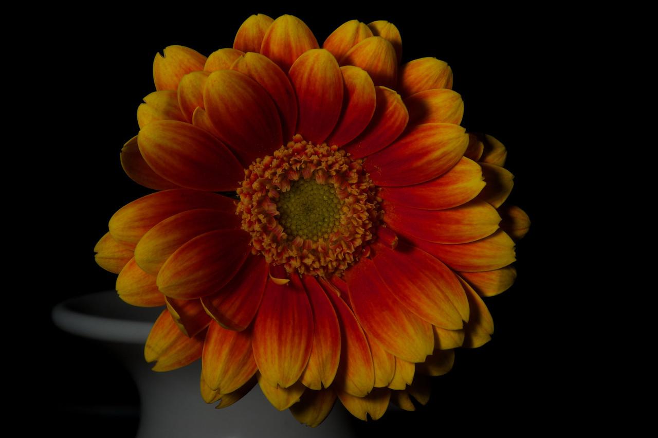 Flower_2010-09-14_22-11-56_DSC_0234_©RichardLaing(2010)
