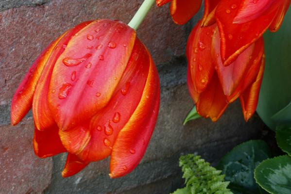 Flowers.. non-macro