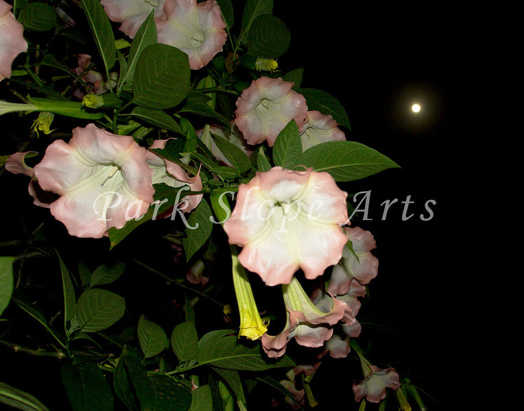 FlowersR-0034