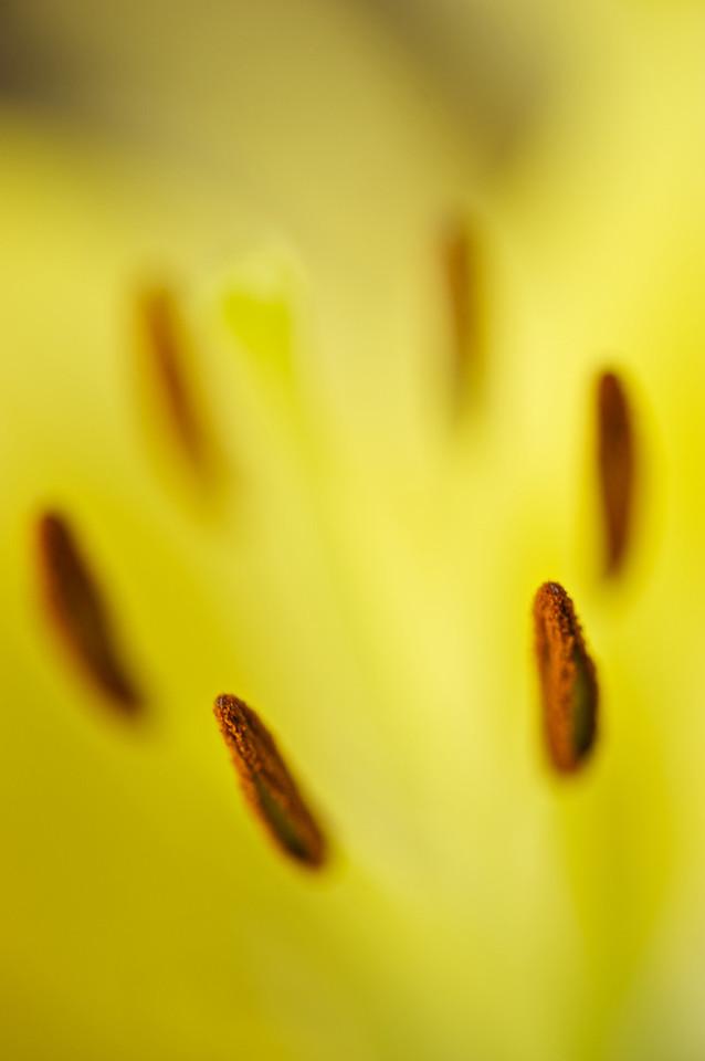Flowers_2011-01-10_13-08-00_DSC_5446_©RichardLaing(2011)