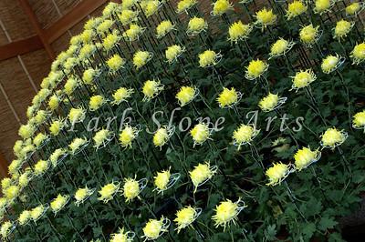 FlowersR-6572