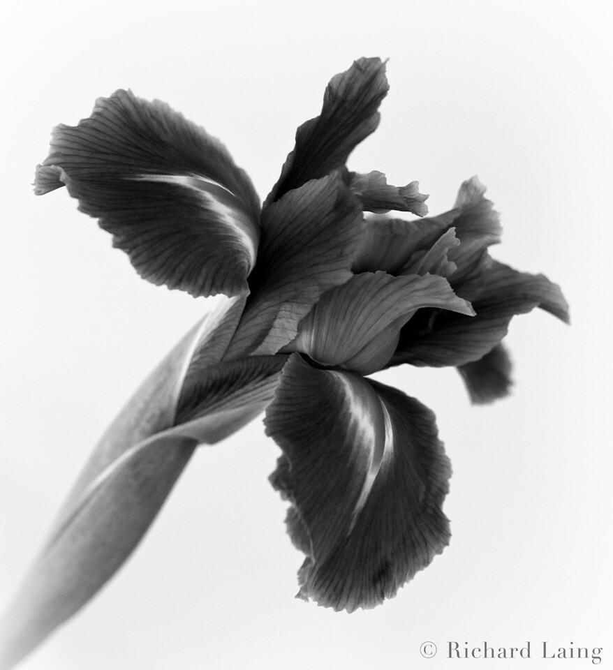 Flowers_2011-05-28_10-03-54_DSC_5094_©RichardLaing(2011)