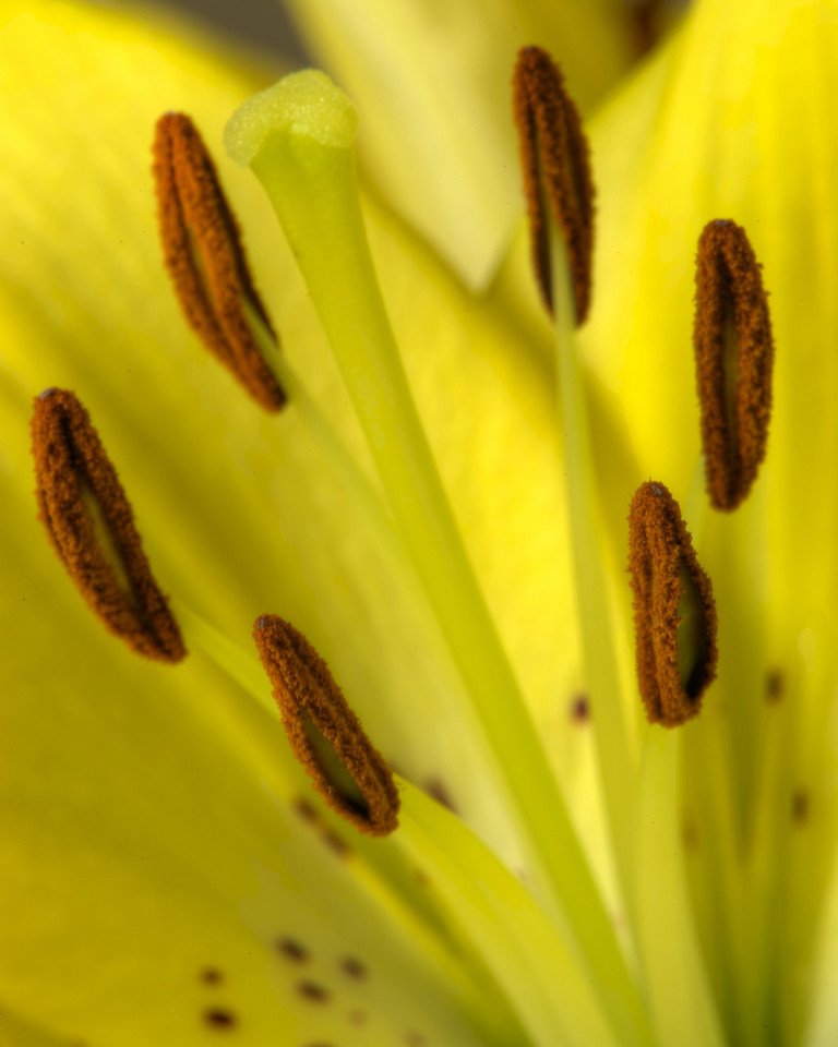 Flowers_2011-01-10_13-08-12_DSC_5448_©RichardLaing(2011)