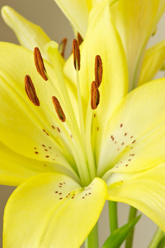 Flowers_2011-01-10_13-05-22_DSC_5412_©RichardLaing(2011)