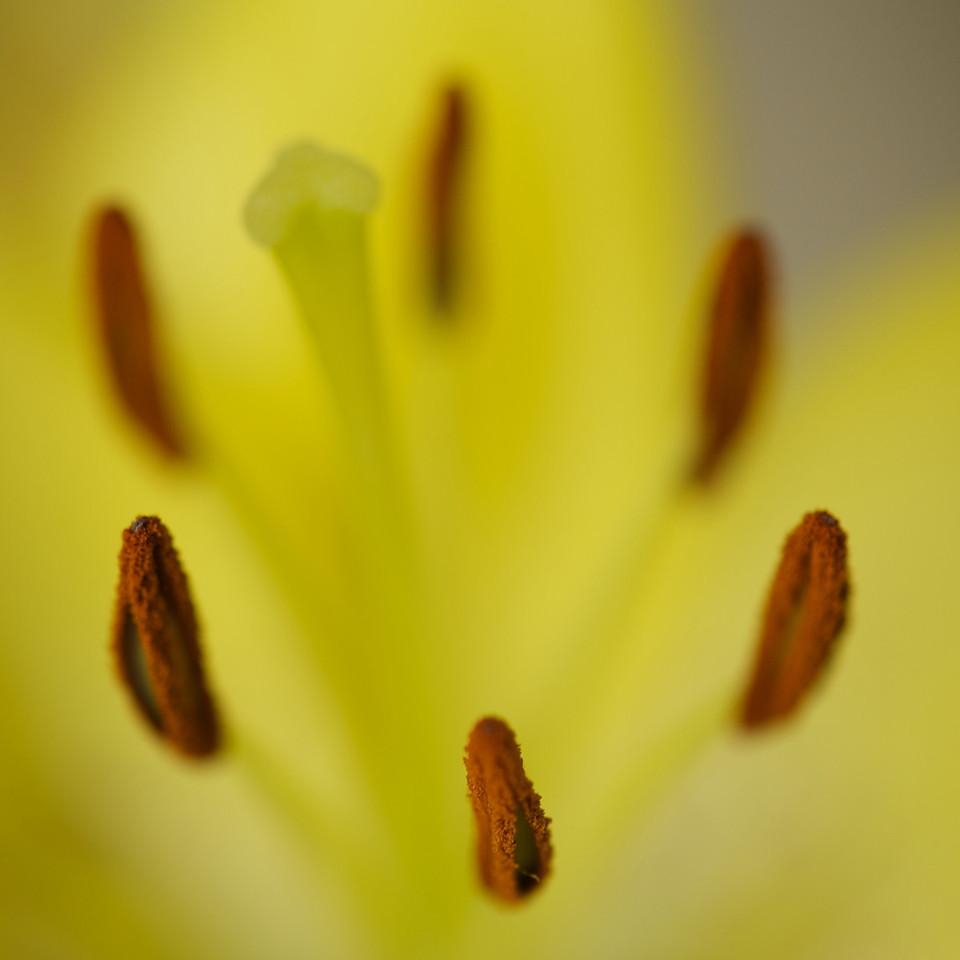 Flowers_2011-01-10_13-03-42_DSC_5378_©RichardLaing(2011)