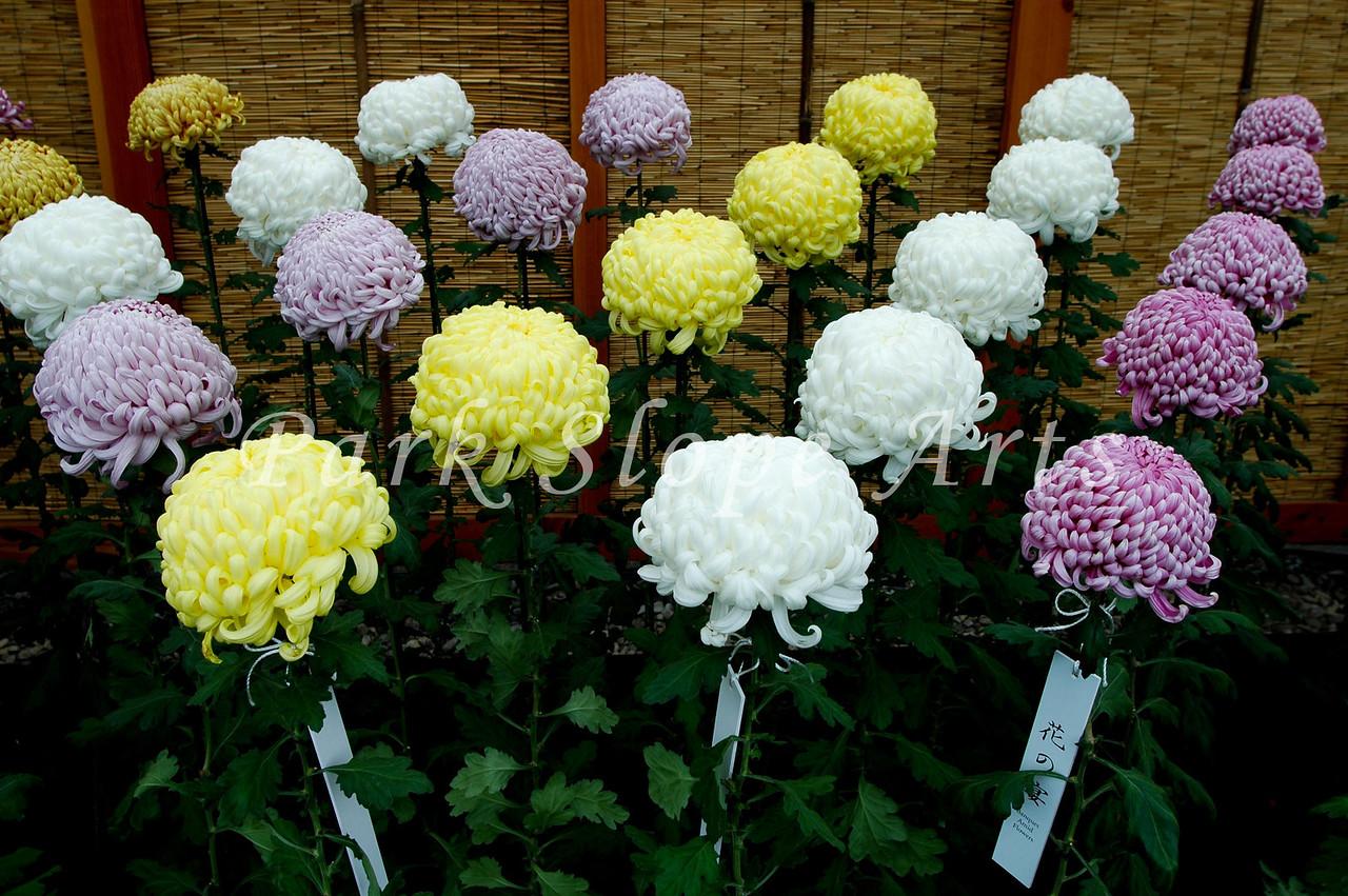 FlowersR-6547