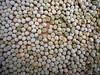 Peas not in a pod1 (Sat 5 3 08)