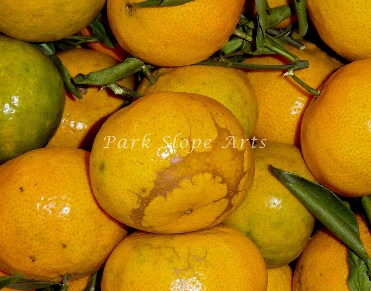 Fruits and Vegatables-00911