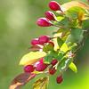 Spring Blooms_GDL_54
