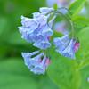 Spring Blooms_GDL_45