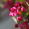 Spring Blooms_GDL_56