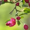 Spring Blooms_GDL_55