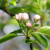 Spring Blooms_GDL_49