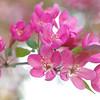 Spring Blooms_GDL_52