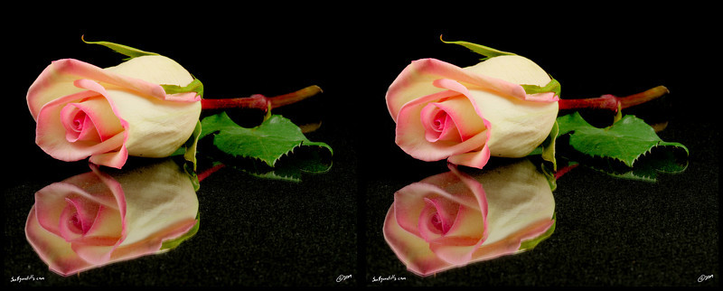 Black Background Stereo Image-8x20