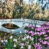 Magnolia Gardens