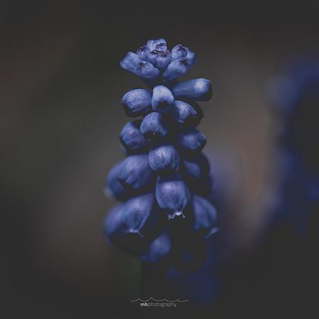 blue bobbles-1-2
