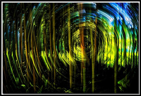 Bambuswirbel