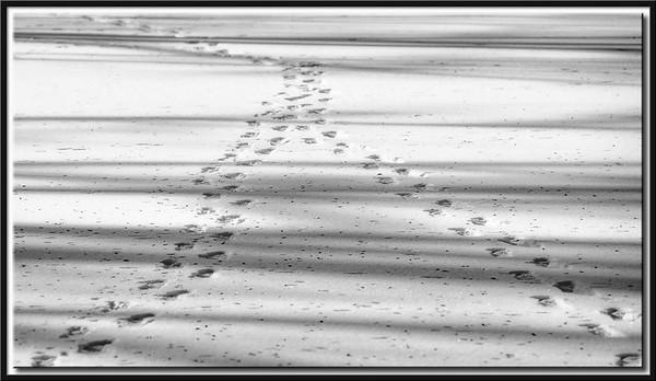 Spuren auf gefrorenem See