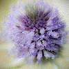 Violet Bouquet Painting