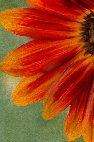 Painted Orange Sunflower