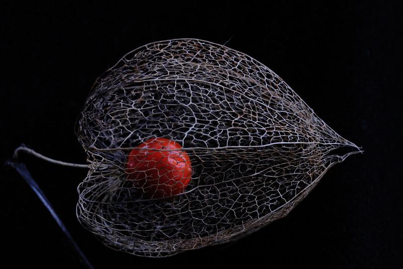 Husk & Berry