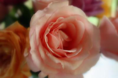 Gail's Spring Photos 001A