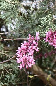 Virginia Tree Close-up