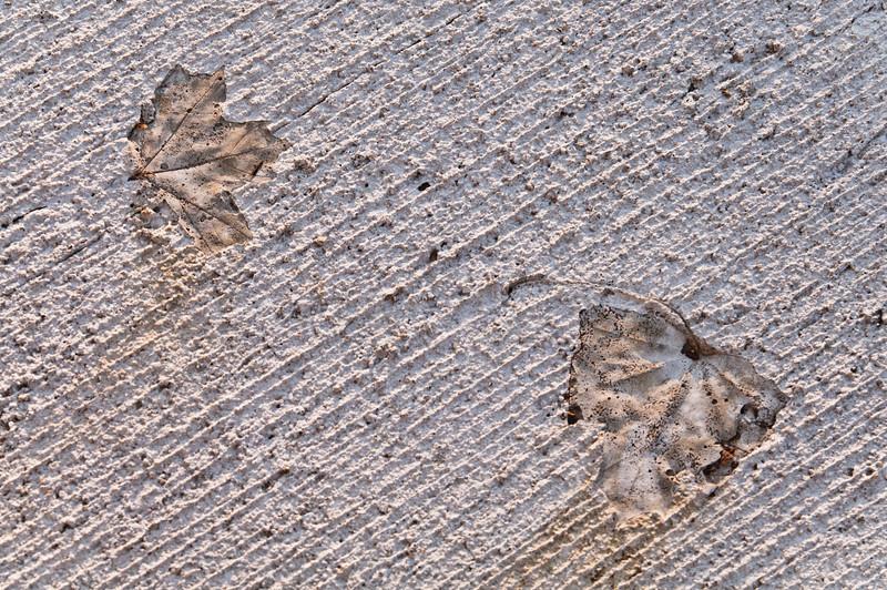 Urban Fossil I