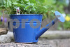 Watering Can in Blue copyrt 2014 m burgess