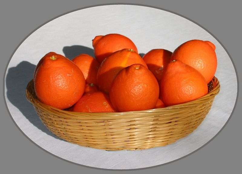 Basket of Minneola Tangelos [elliptical crop, borders]