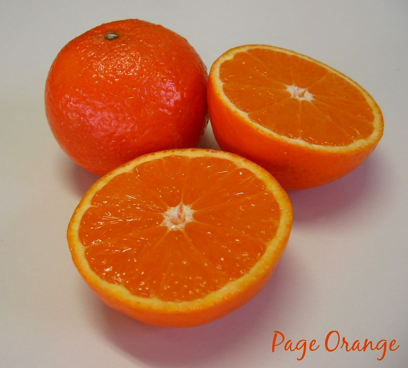 Page Oranges (actually a  tangtangelo) - 1 intact, 2 halves [text]