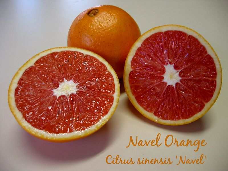 00aFavorite Navel Oranges [text]