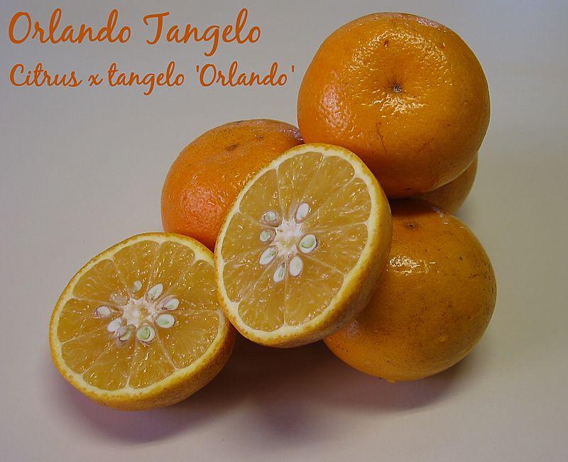 00aFavorite Orlando tangelo (organic) [text]