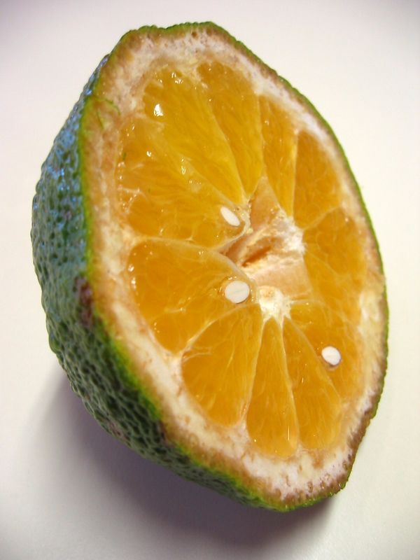 Ugli Tangelo - green-skinned half