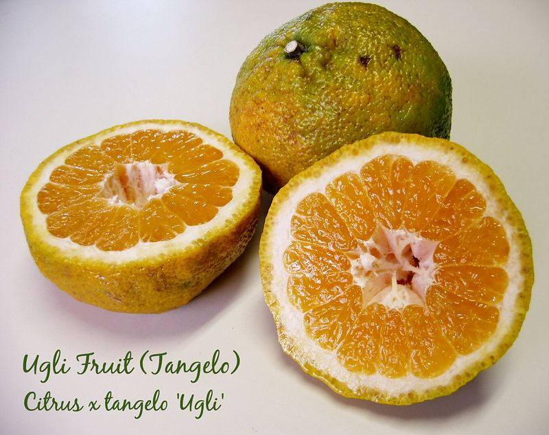 00aFavorite Ugli Fruit - 1 intact, 1 cut [text]