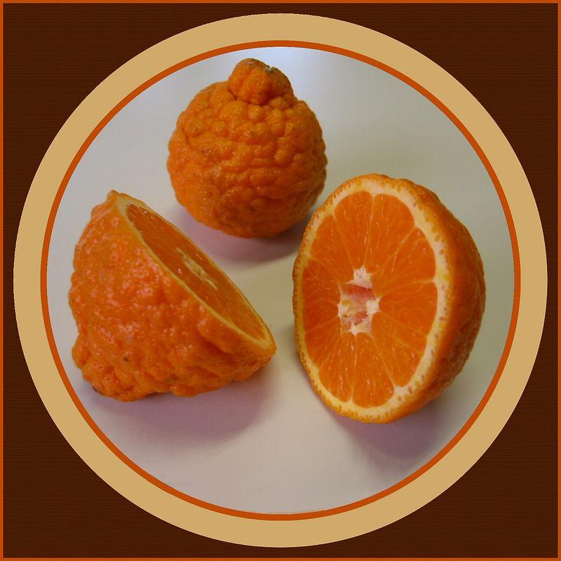 Pixie Tangerines - 1 cut in half, 1 intact [circular border, wood grain texture]
