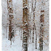 Three Birch Trees Painterly