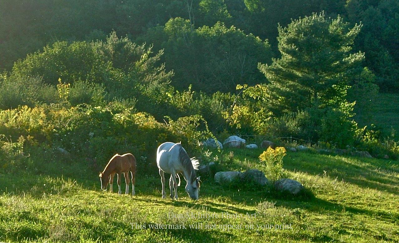Horses on Creek Road, North Clarendon VT