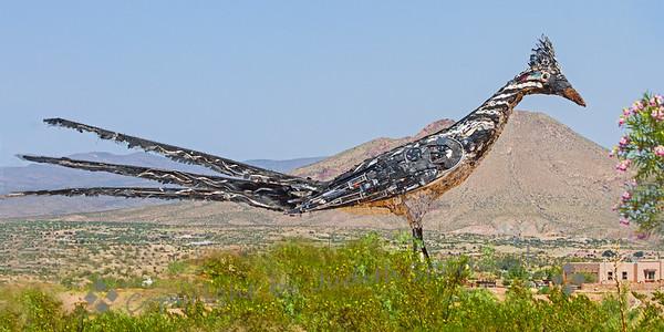 Roadrunner of Las Cruces