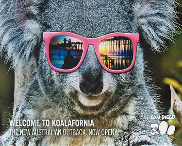 Koalafornia at the San Diego Zoo