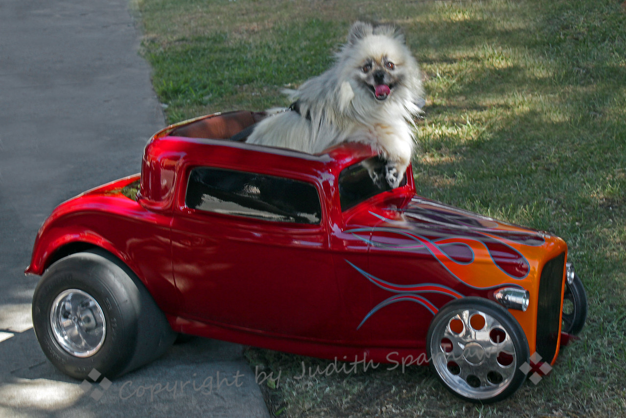 Doggie Hot Rodder ~ All kinds of visitors come to the Route 66 Rendezvous celebration in San Bernardino, California.